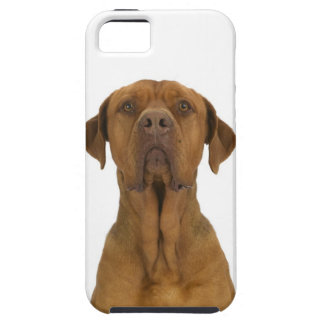 Dog on White 38 iPhone 5 Covers