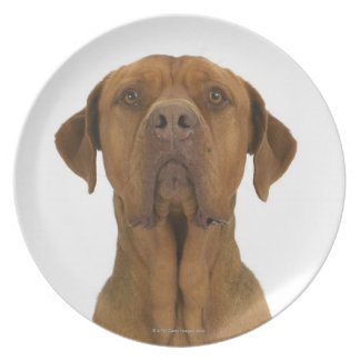 Dog on White 38 Plate