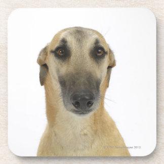 Dog on White 41 Coaster