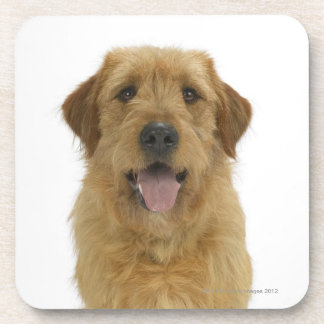 Dog on White 44 Coaster