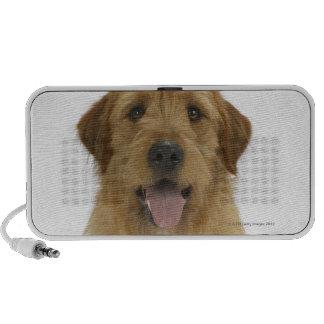 Dog on White 44 Speakers