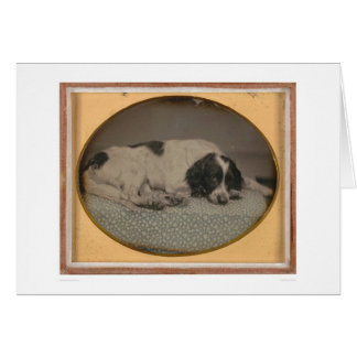 Dog owned by Sheldon Nichols (39986) Greeting Card