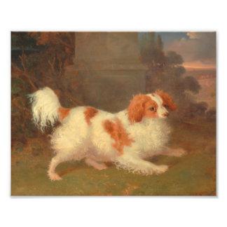 dog painting Blenheim spaniel Photographic Print