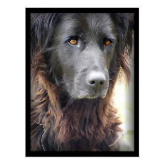 dog painting postcards