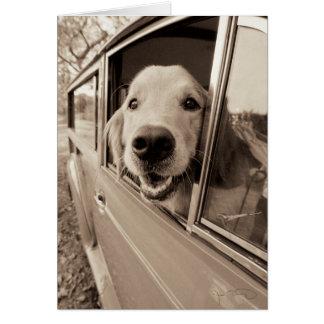 Dog Peeking Out a Car Window Greeting Card