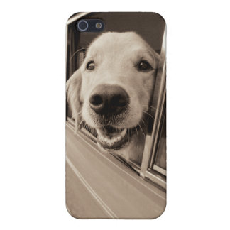 Dog Peeking Out a Car Window iPhone 5/5S Cases