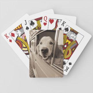 Dog Peeking Out a Car Window Playing Cards