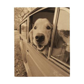 Dog Peeking Out a Car Window Wood Wall Art