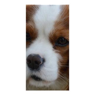 Dog Personalized Photo Card