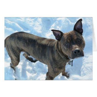 Dog Photo Card - Marshall Pickles