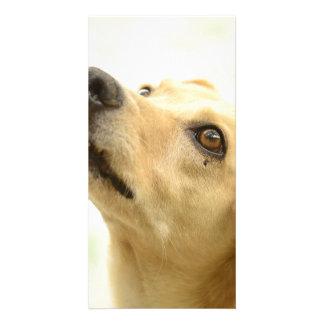 dog photo card template