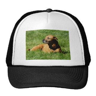 dog,pitbull/boxer mix trucker hat