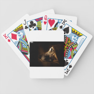 dog deck of cards
