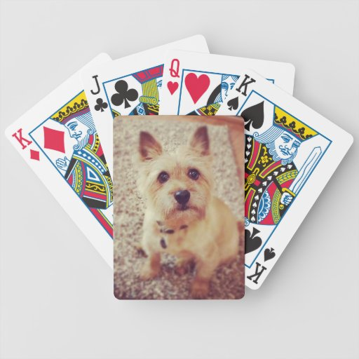 Dog Poker Cards