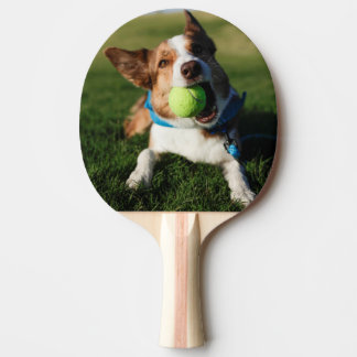 Dog Playing with its ball Ping Pong Paddle