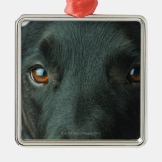 Dog portrait close up christmas ornament