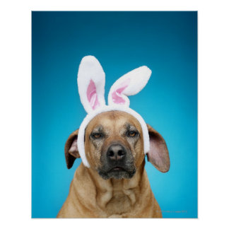 Dog portrait wearing Easter bunny ears Poster