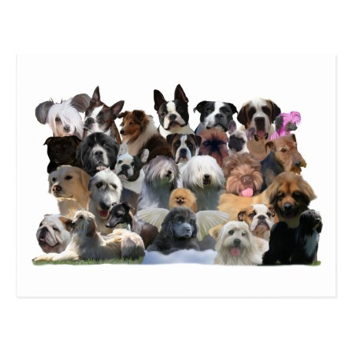 Dog Portraits Postcard