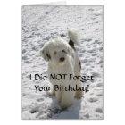 Dog Pose/Belated Birthday Card