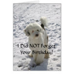 Dog Pose/Belated Birthday Greeting Card