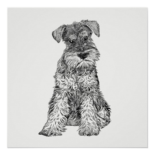 Dog Poster / Wall Art Schnauzer
