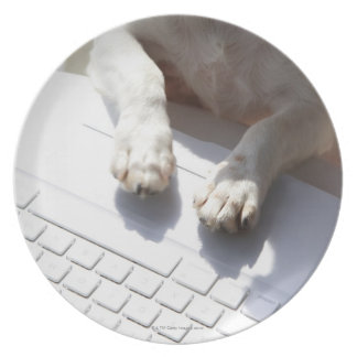 Dog putting his hands on a laptop dinner plate