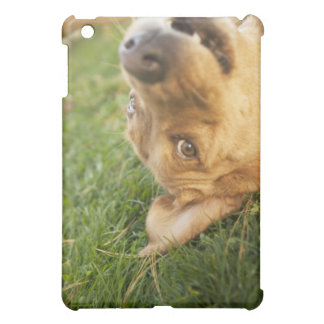 Dog rolling on back iPad mini cases