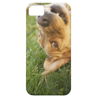 Dog rolling on back iPhone 5 case