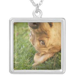 Dog rolling on back silver plated necklace