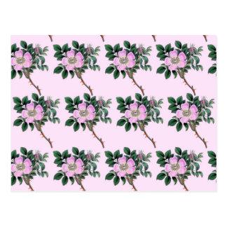 Dog Rose - Flowers Petals Leaves - Pink Green Post Cards