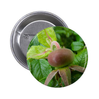 Dog Rose Hip 6 Cm Round Badge