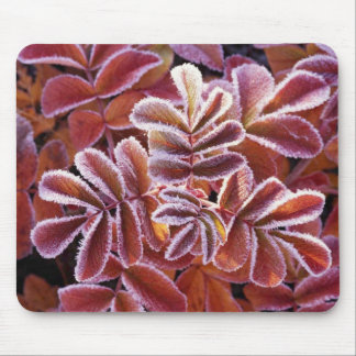 Dog rose leaves covered with frost mouse pad