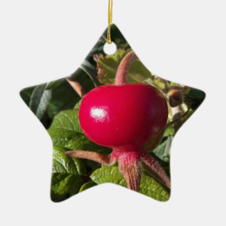 Dog Rose of the hedge Christmas Ornament