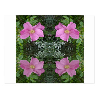 Dog roses in reflect postcard