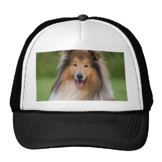 dog rough collie wait for love cap