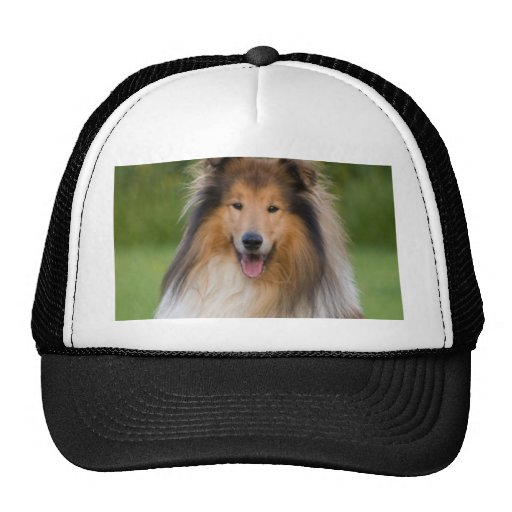 dog rough collie wait for love hats