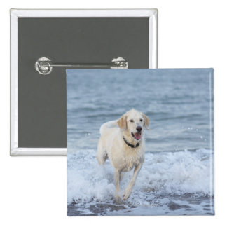 Dog running in water at beach. 15 cm square badge
