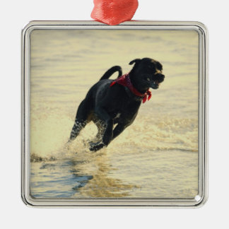 Dog running in water christmas ornament