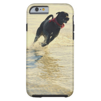 Dog running in water tough iPhone 6 case