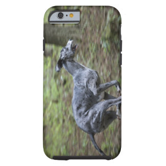 Dog running in woods tough iPhone 6 case