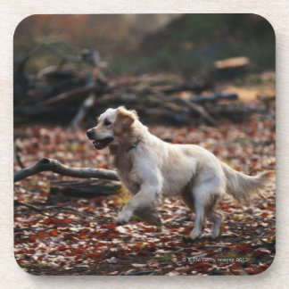 Dog running on dry leaves coasters