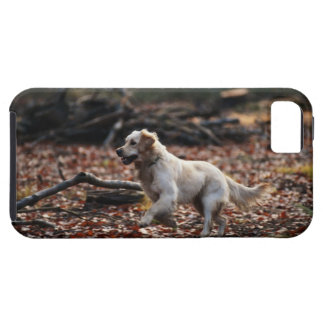 Dog running on dry leaves iPhone 5 covers