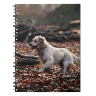 Dog running on dry leaves notebook