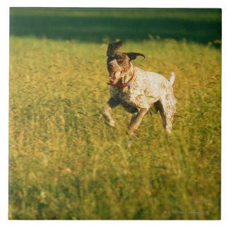 Dog running through grass tile