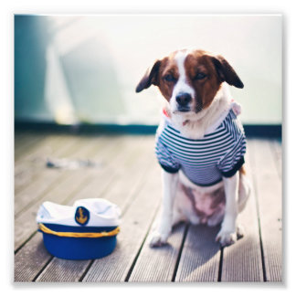 Dog Sailor Sitting Cap Clothes White Nautical Photographic Print