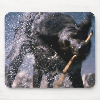 Dog Shaking Water from His Coat Mouse Mat