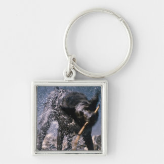 Dog Shaking Water from His Coat Silver-Colored Square Key Ring