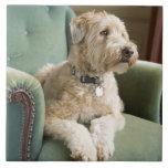 Dog sitting in armchair ceramic tiles