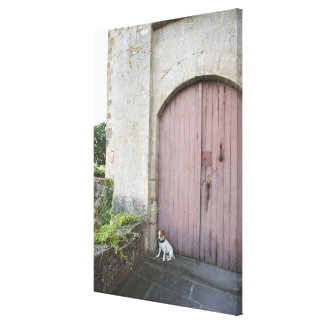Dog sitting in front of closed doors canvas print