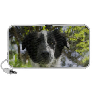 Dog sitting in grass notebook speakers